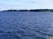 Dolphin follows