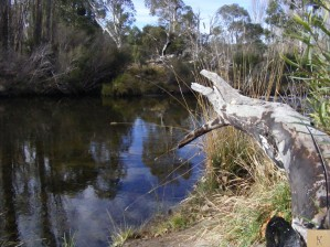 Up-Stream the Snowy River