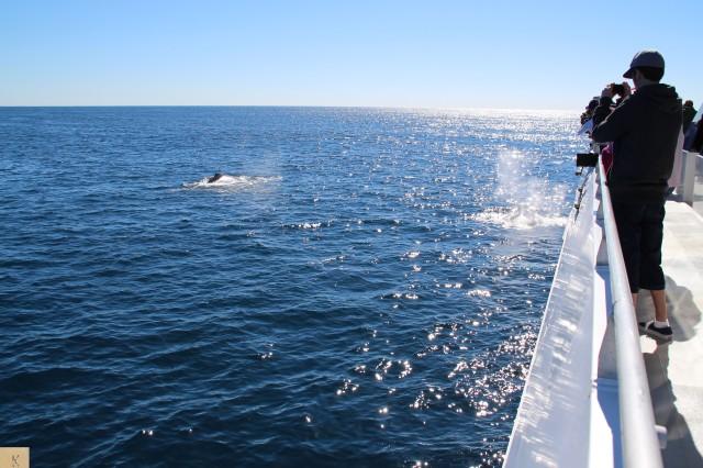 Watching Whale Watchers