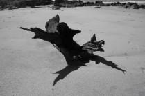 Driftwood BW