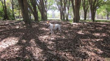 Dog Park Chi