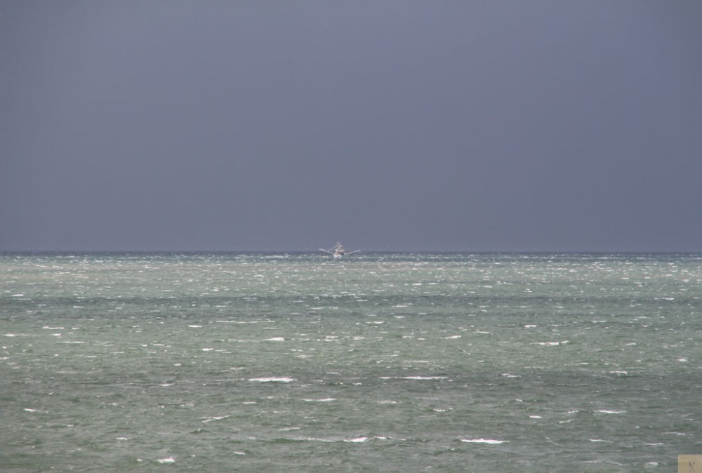 Trawling in Moreton Bay (1/6)