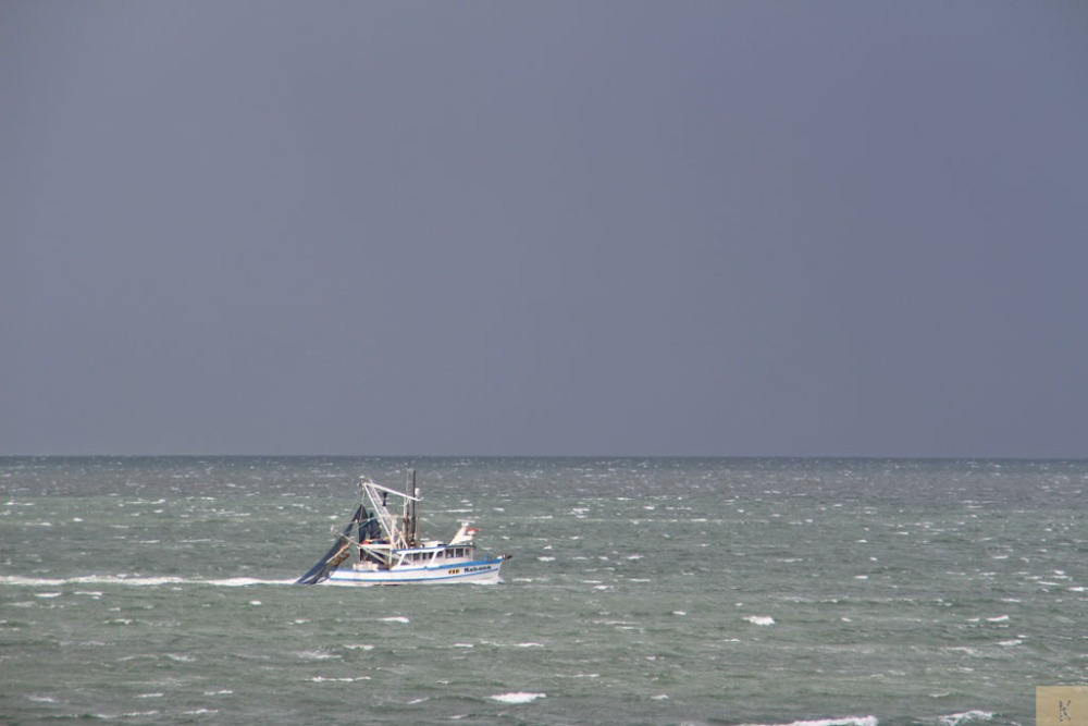 Trawling in Moreton Bay (2/6)
