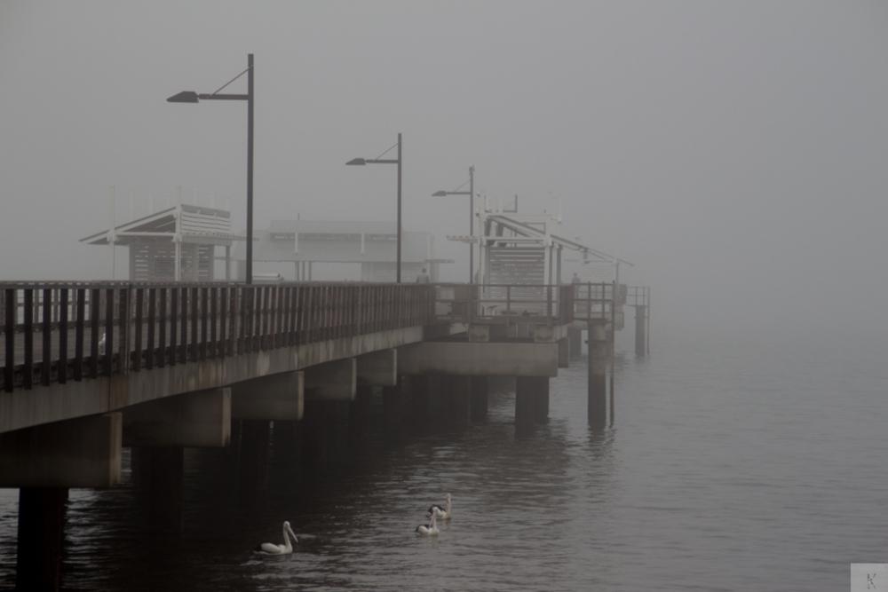 Fog (1/6)