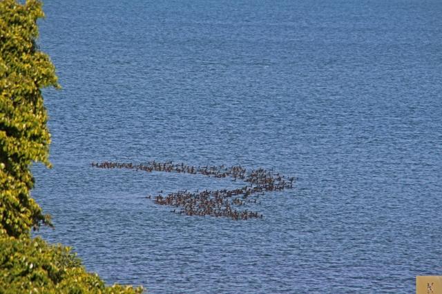 Birds forming trap