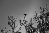 Mango treetop