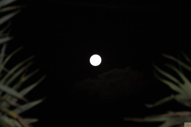 Mooloolaba Moon 1