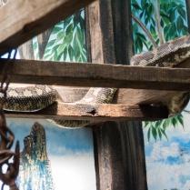 az-snake-python