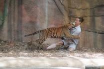 az-tiger-tastes-trainer