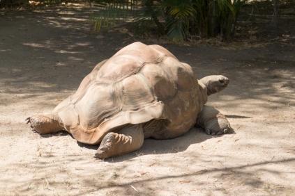 az-tortoise