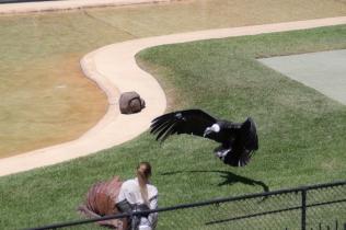 az-vulture